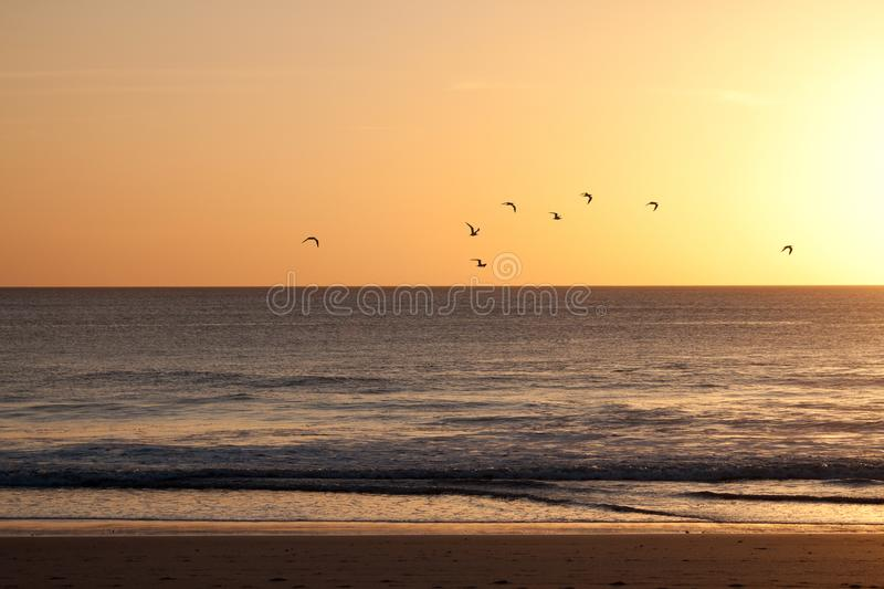 Multitud de los pájaros que vuelan en una puesta del sol foto de archivo libre de regalías