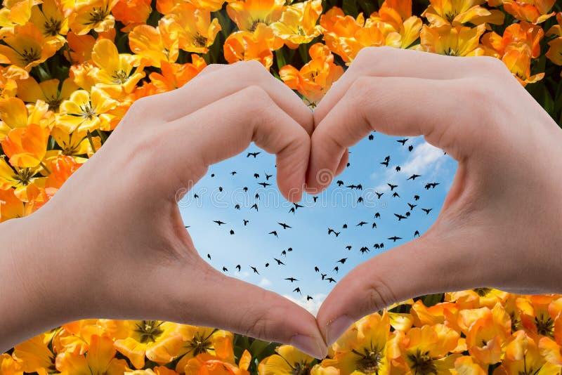 Multitud de los pájaros vistos detrás de una mano en forma de corazón fotos de archivo