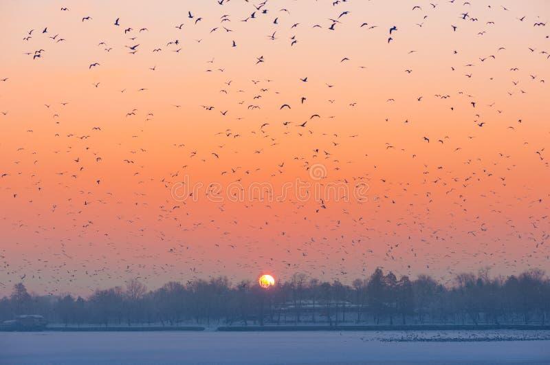Multitud de pájaros foto de archivo