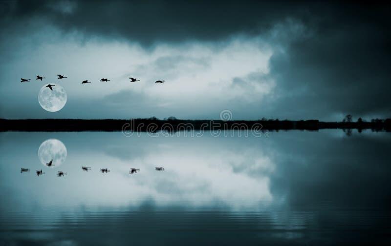 Multitud de pájaros en el fullmoon imagen de archivo