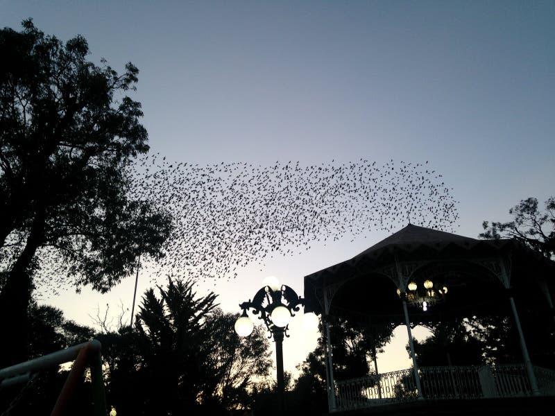Multitud de pájaros en el medio del parque fotografía de archivo