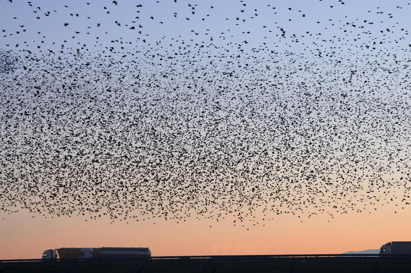 Multitud de pájaros en la carretera fotografía de archivo