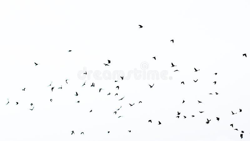 Multitud de pájaros en silueta fotos de archivo
