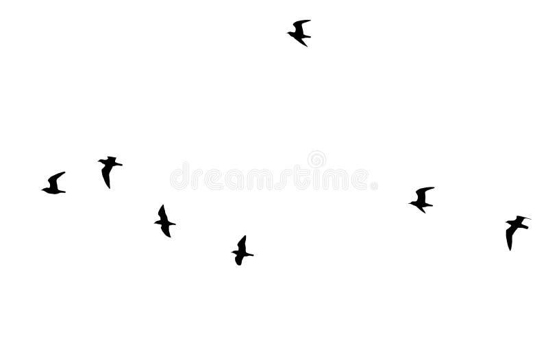 Multitud de pájaros en un fondo blanco fotos de archivo