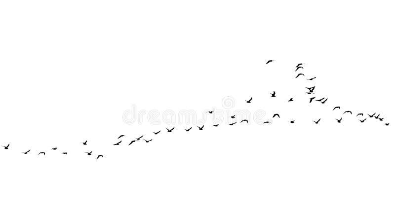 Multitud de pájaros en un fondo blanco fotografía de archivo