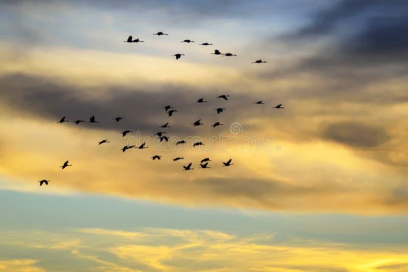 Multitud de pájaros en vuelo fotos de archivo