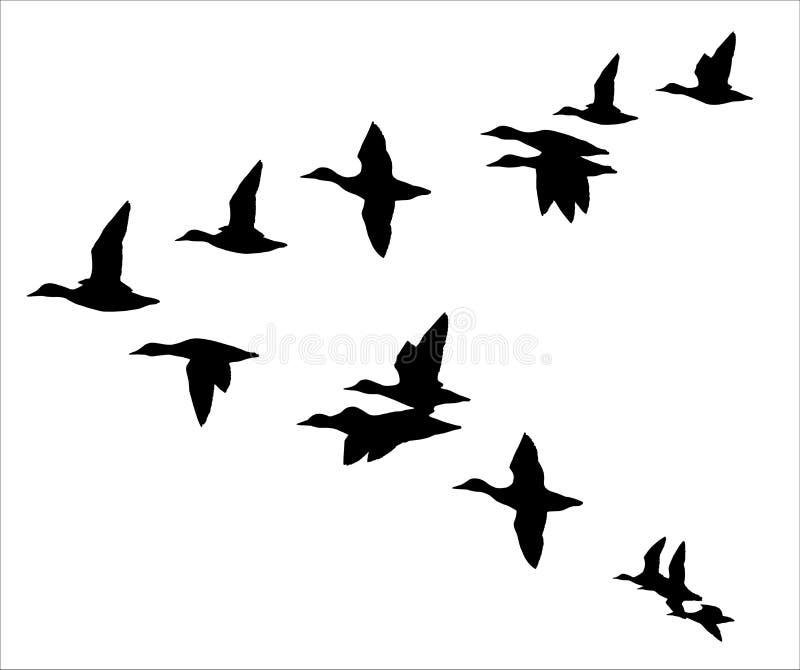 Multitud de patos libre illustration