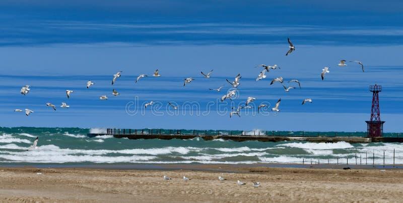 Multitud de Ring Billed Gulls foto de archivo