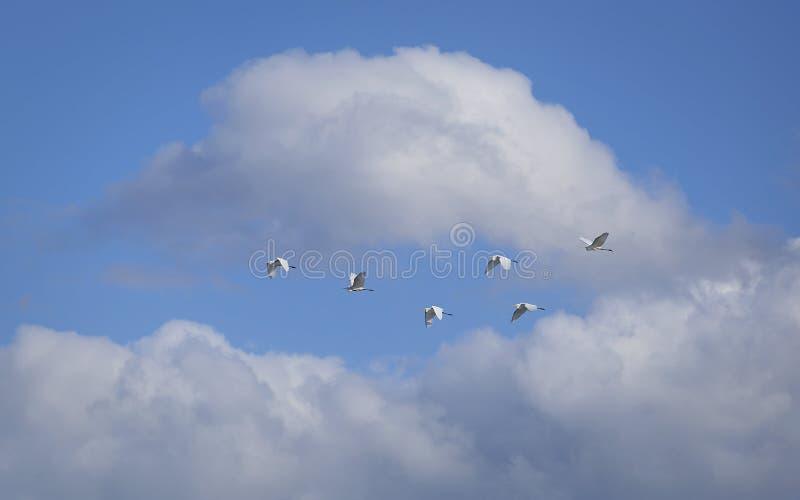 Multitud del vuelo de pájaros fotos de archivo