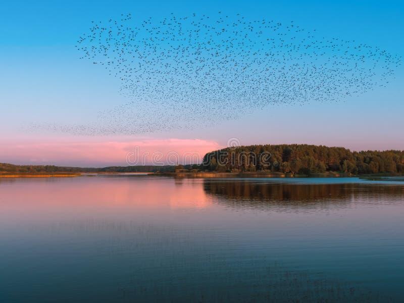 Multitud gigante de volar de los pájaros imagen de archivo libre de regalías