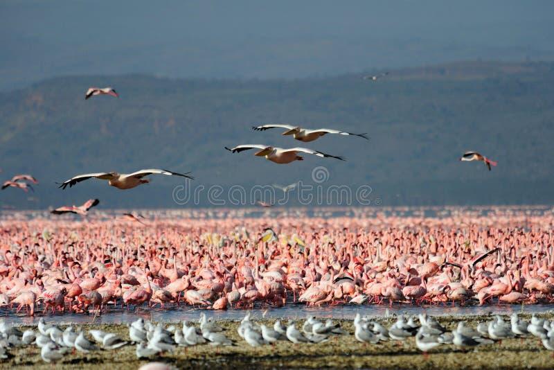 Multitud grande de pájaros salvajes fotografía de archivo
