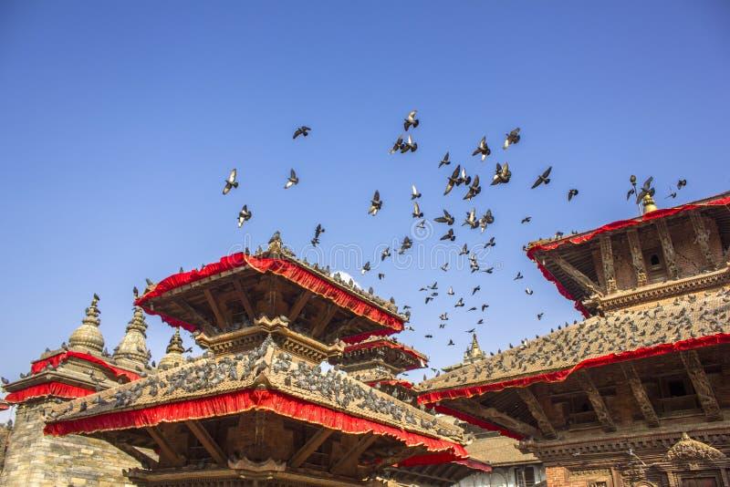 multitud grande de palomas grises en los tejados de las pagodas de templos asiáticos rojos y volar en el cielo claro azul fotos de archivo