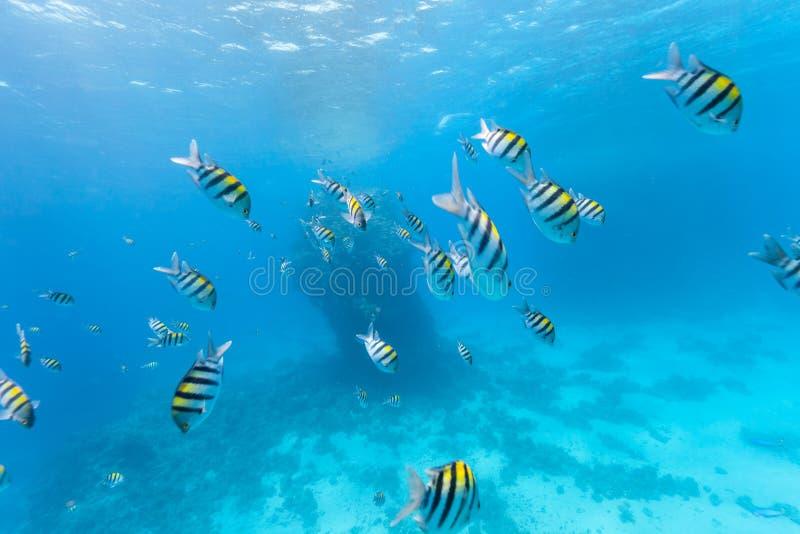 Multitud subacuática de pescados foto de archivo libre de regalías