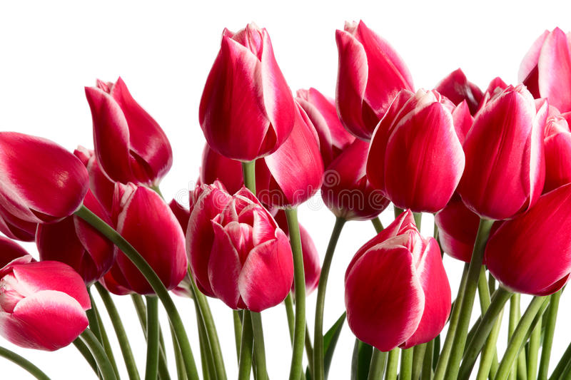 Download Multitude stock photo. Image of plant, flores, floral - 23393892
