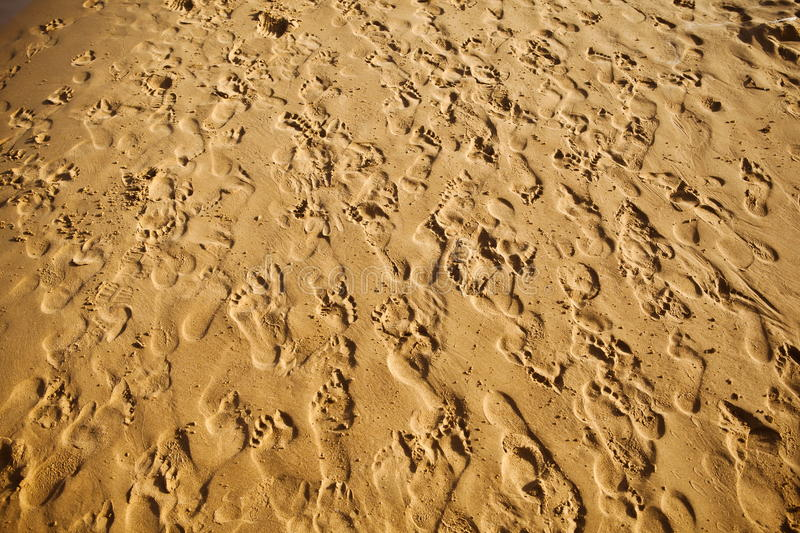 Multitude Of Footprints On The Sand Royalty Free Stock Photography