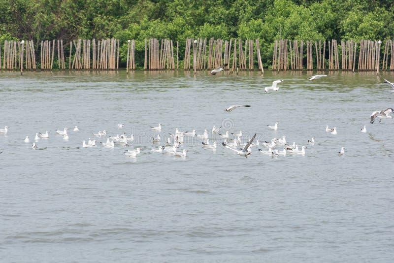 Multitudes de la gaviota en el agua fotografía de archivo