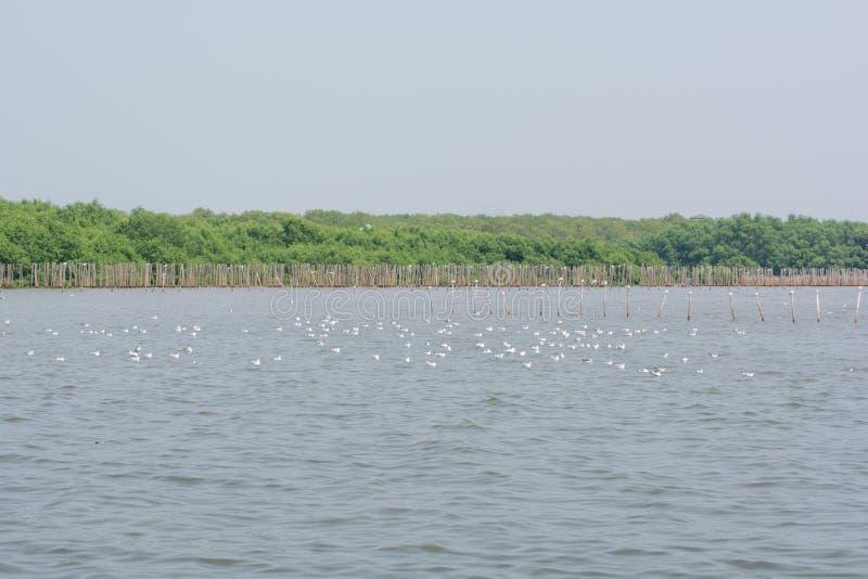 Multitudes de la gaviota en el agua fotografía de archivo libre de regalías