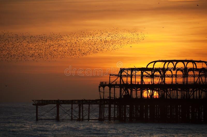 Multitudes de starlings sobre el embarcadero del oeste, Brighton imagenes de archivo
