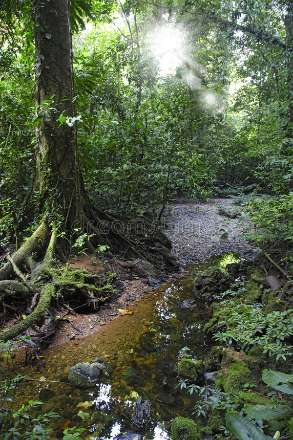 Mulu park narodowy obraz royalty free