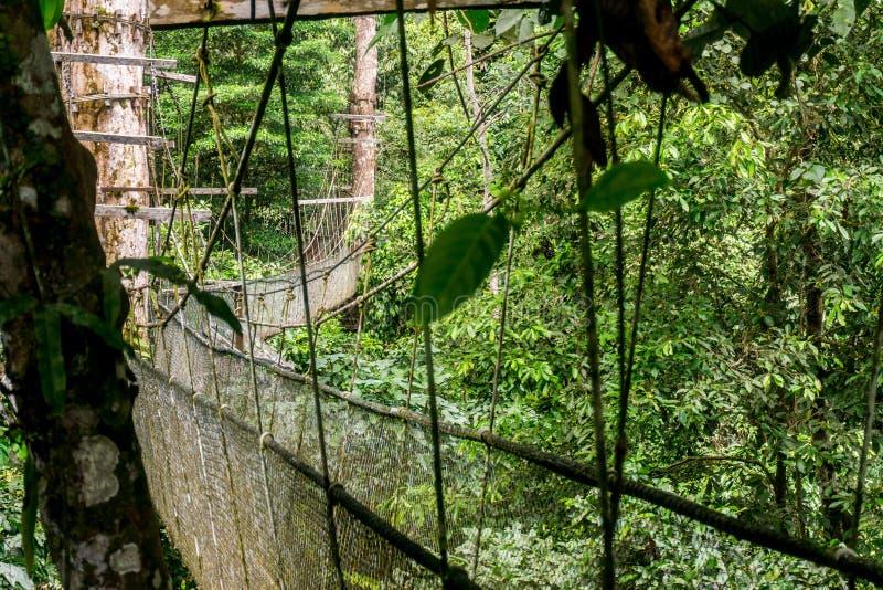 Mulu (Sarawak), Borneo zdjęcia stock