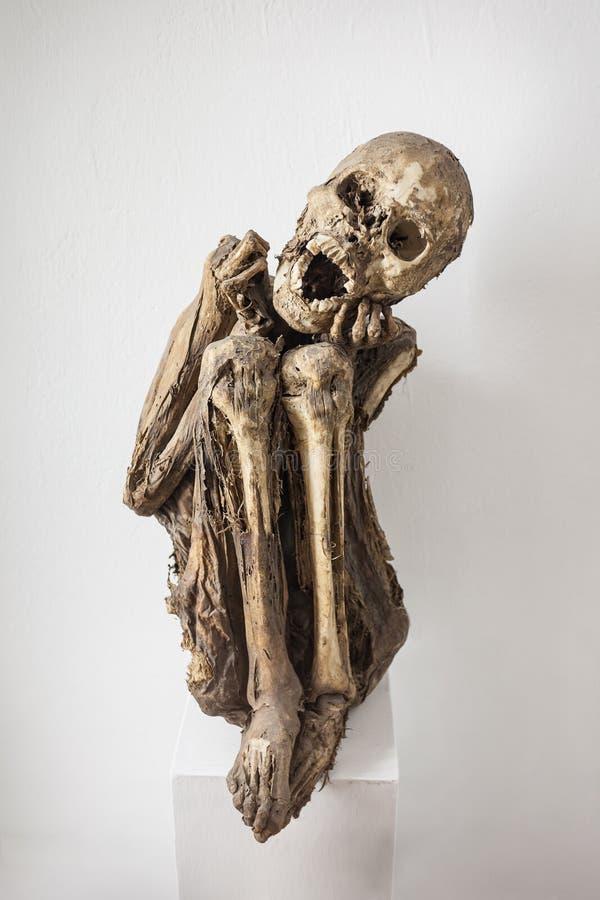 Mummified человеческий труп стоковая фотография