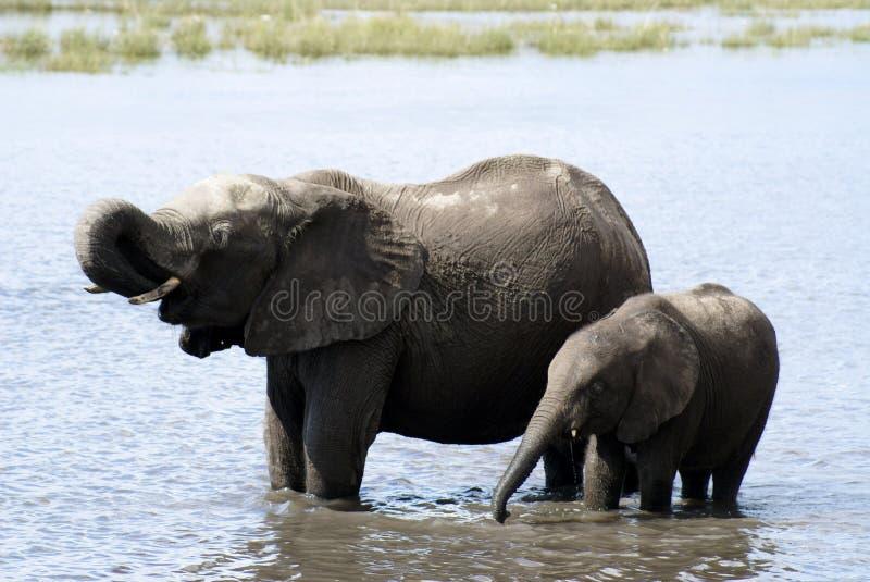 Mummy Elephant and Baby