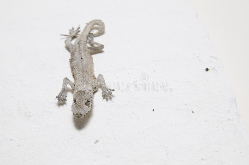 Download The Mummy Gecko Stock Image - Image: 13387741