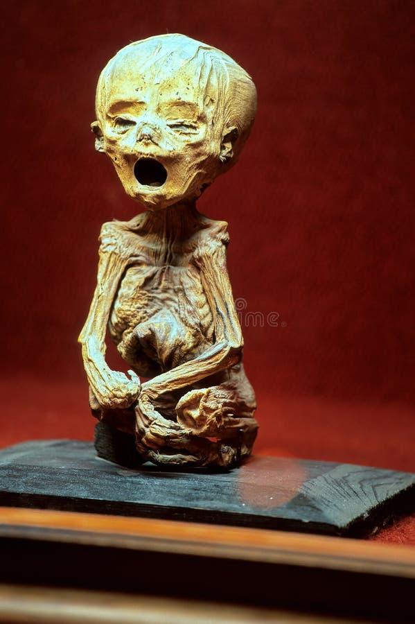 Mummy museum- Guanajuato, Mexico royalty free stock photography