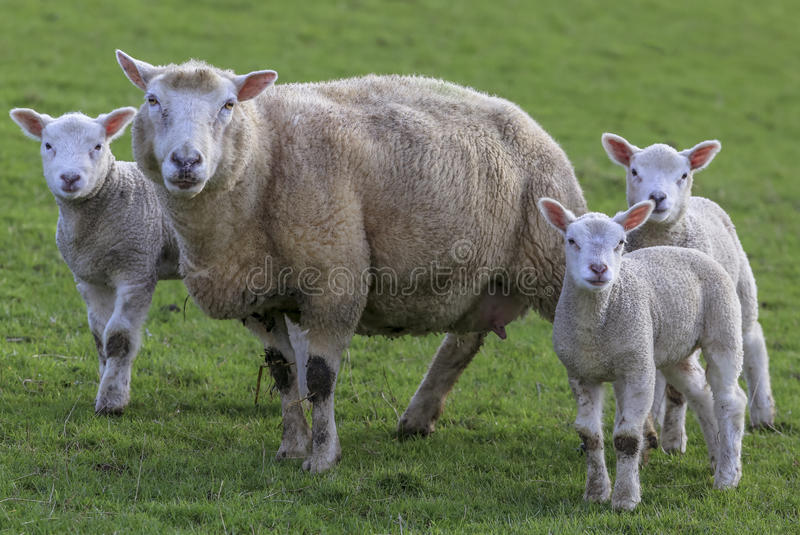 Download Mummy Posing With Her Babys Stock Photo - Image: 83702580