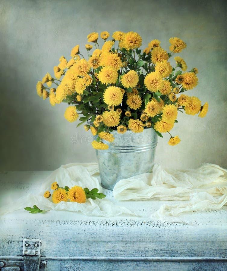 Mums amarelos bonitos fotos de stock royalty free