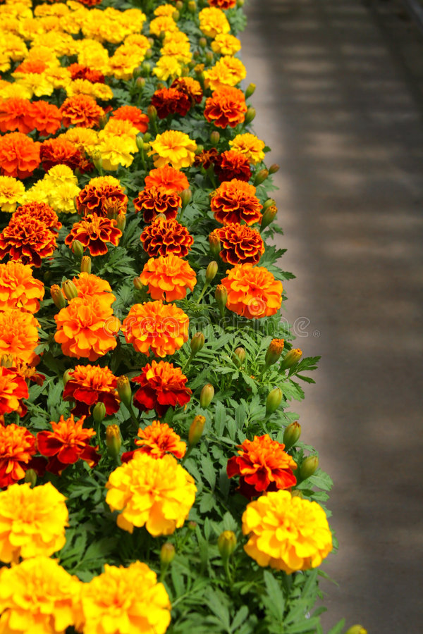 Mums in a Nursery stock images