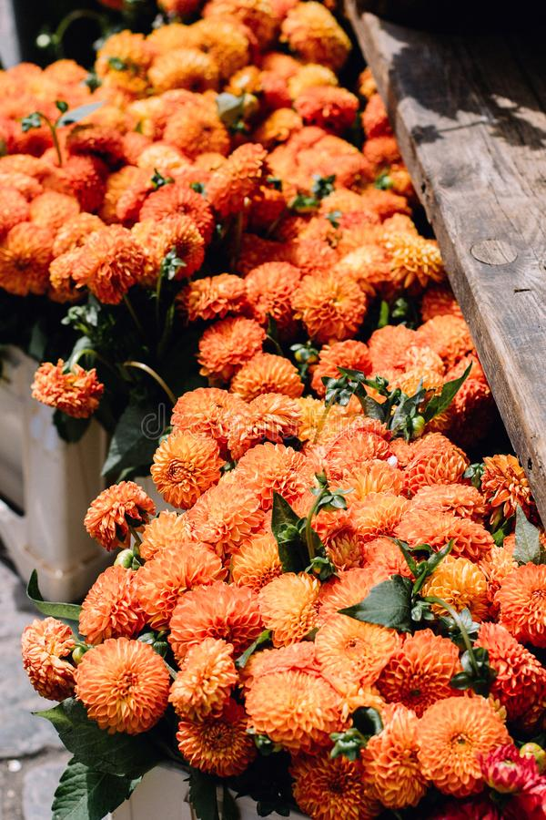 Mums for sale at a market stock images