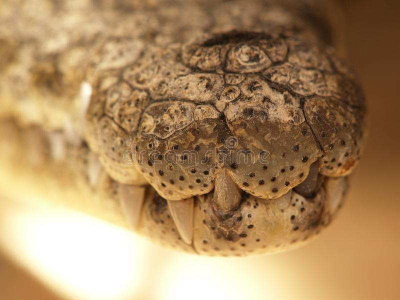 Mund des Nil-Krokodils lizenzfreies stockbild