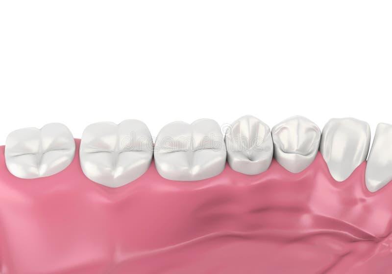 Mund-Gummi und Zähne lokalisiert stock abbildung