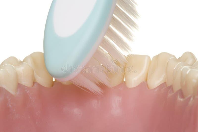Mundhygiene lizenzfreies stockfoto
