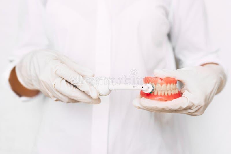 Mundhygiene Abschluss herauf Handzahn?rzte zeigen, wie man ihre Z?hne richtig putzt Zahnmedizinische Prothese in den Händen von lizenzfreie stockfotos
