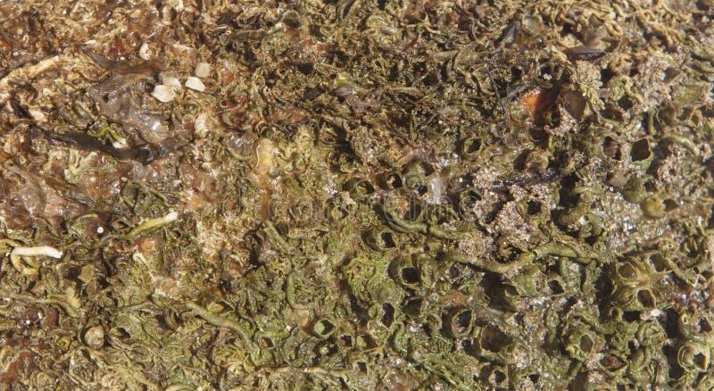 Mundo antiguo del mar imágenes de archivo libres de regalías