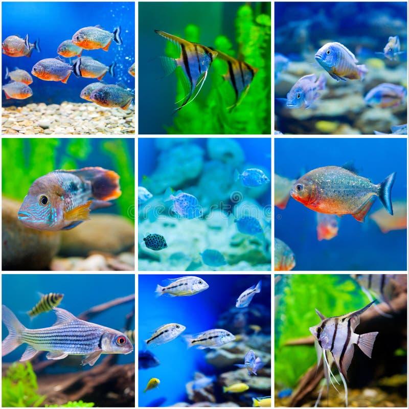 Mundo azul del agua salada en acuario foto de archivo libre de regalías