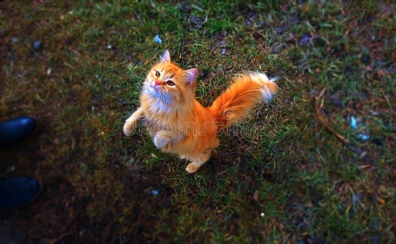 Mundo colorido mágico con un gato mágico foto de archivo libre de regalías