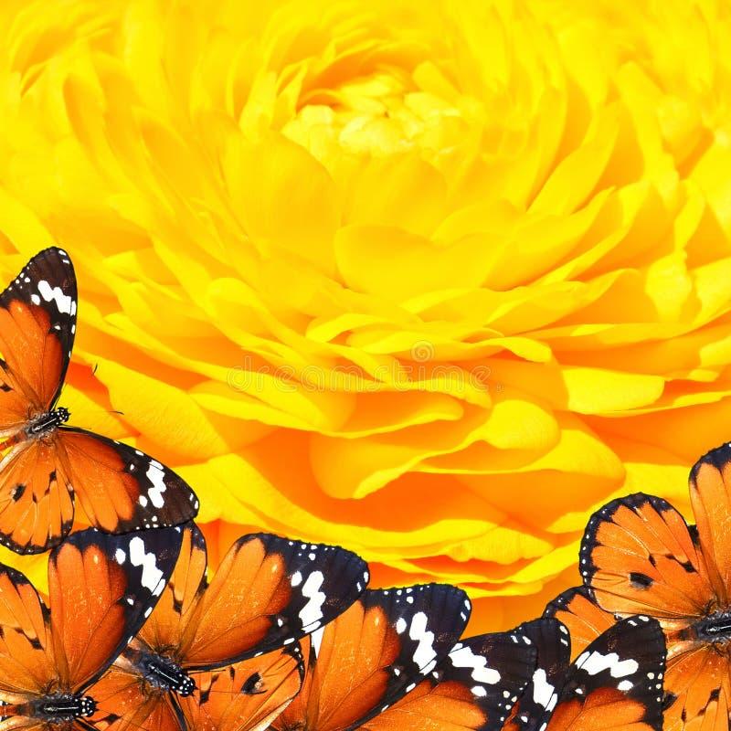 Mundo da mágica das borboletas ilustração stock