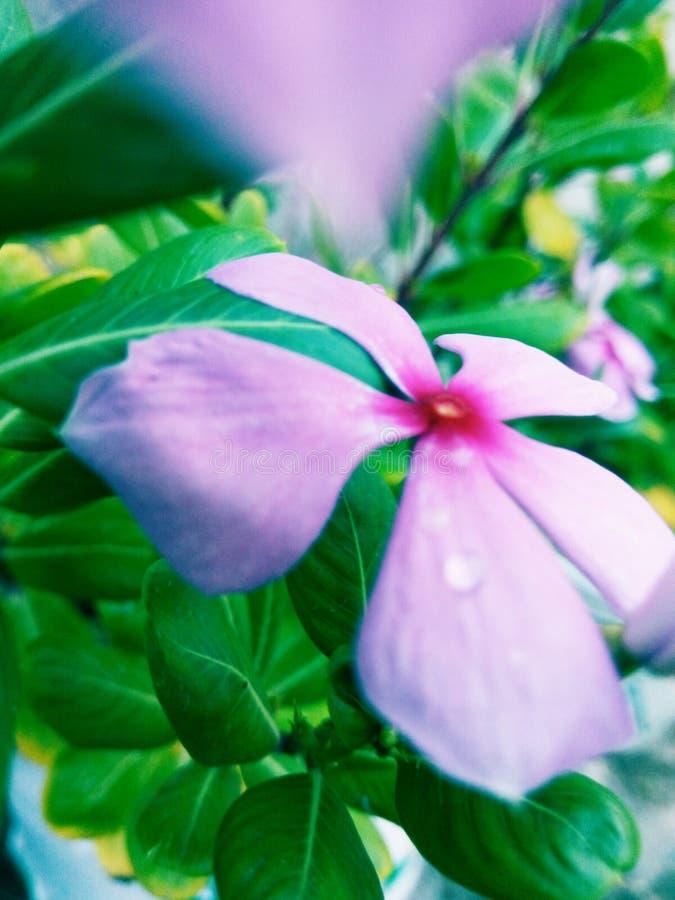 Mundo das flores fotografia de stock royalty free