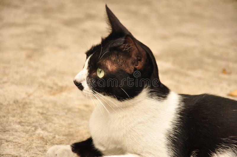 Mundo de gatos foto de archivo