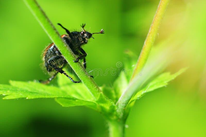 Mundo de insectos imagen de archivo libre de regalías