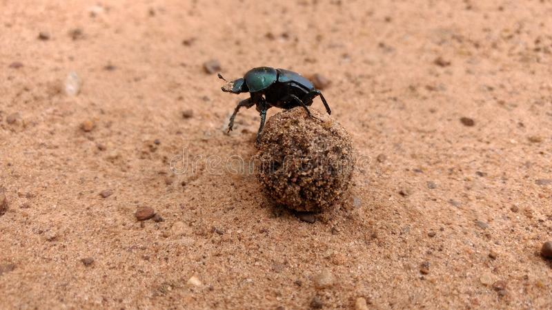 Mundo de inseto fotos de stock