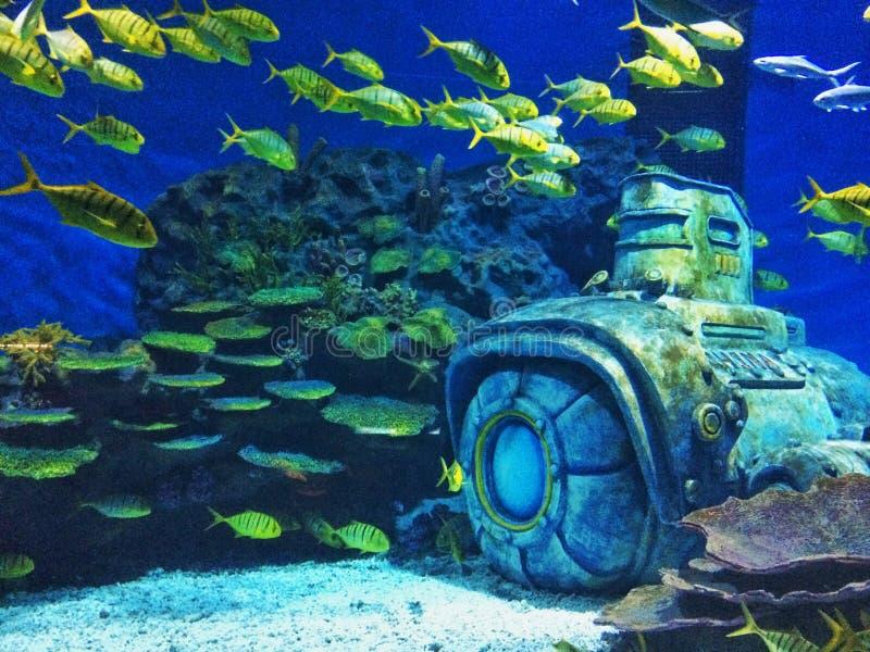 Mundo del mar fotografía de archivo libre de regalías
