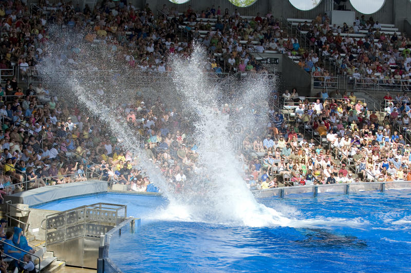 Mundo del mar del chapoteo de la ballena de asesino de Shamu fotos de archivo
