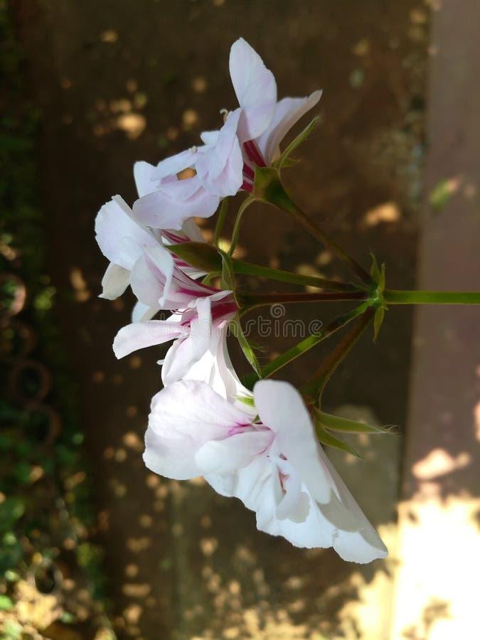 Mundo a maioria de flores bonitas foto de stock