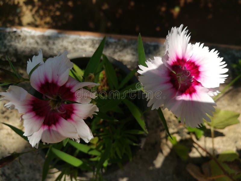 Mundo a maioria de flores bonitas imagens de stock royalty free