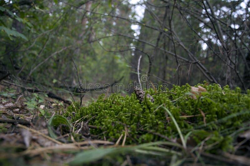 Mundo minúsculo na floresta foto de stock royalty free