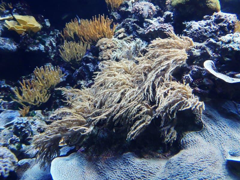 Download Mundo subacuático foto de archivo. Imagen de mundo, gente - 41908032